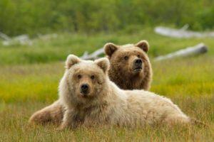 DisneyNature Presents Bears