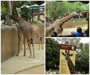 LA Zoo DisneyNatureBears
