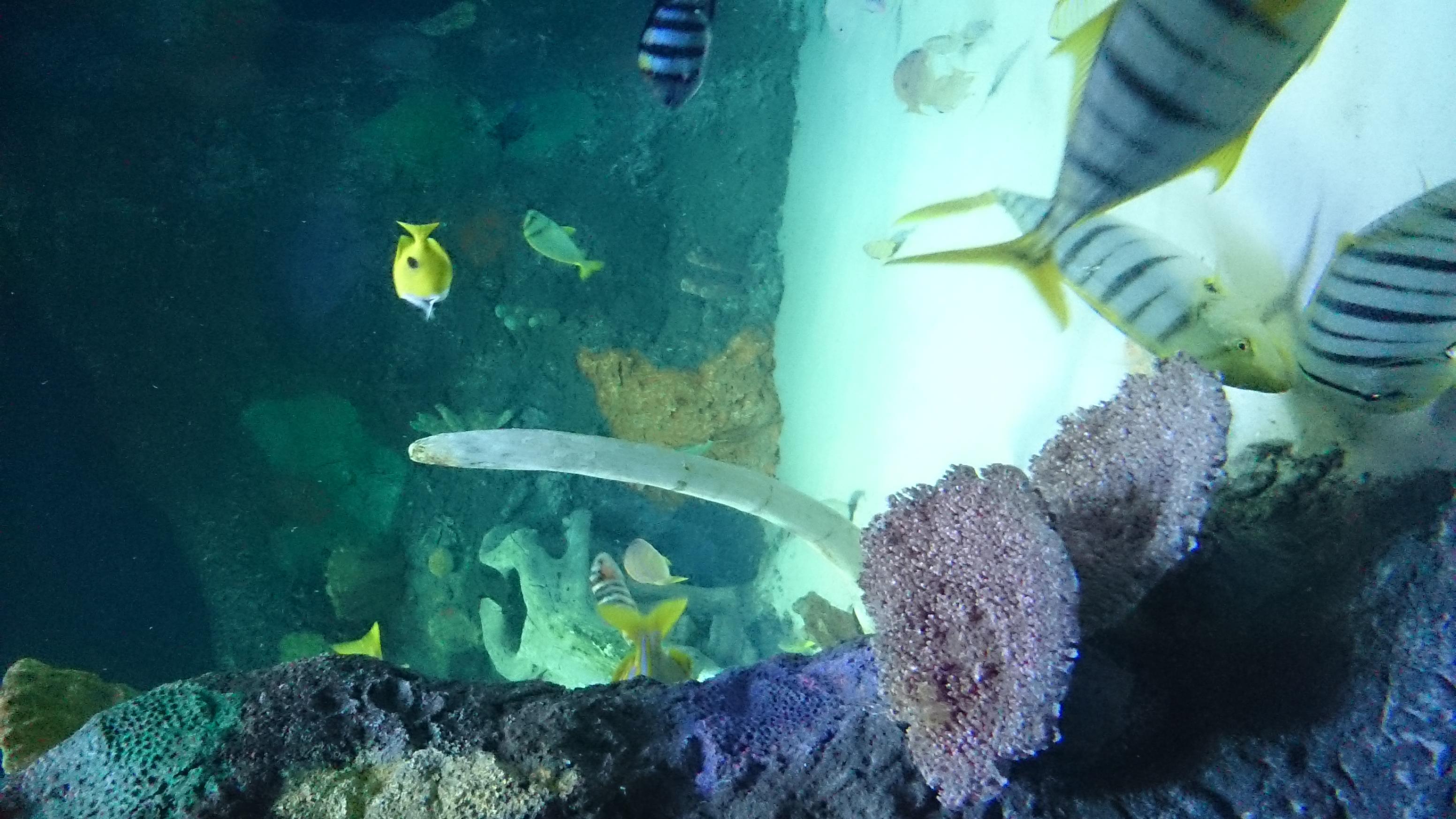 Freshwater fish kansas city - Kansas City Sealife Aquarium