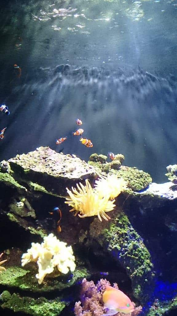 Kansas City SeaLife Aquarium