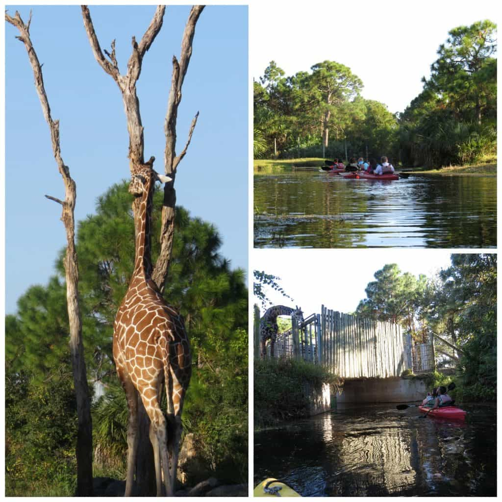 Kayaking through zoo