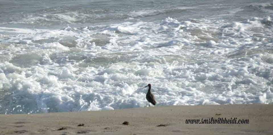 Bird Ocean Tuckaway Shores