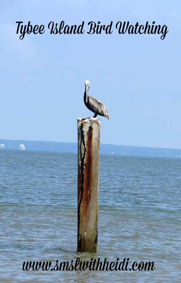 Tybee Island Bird Watching