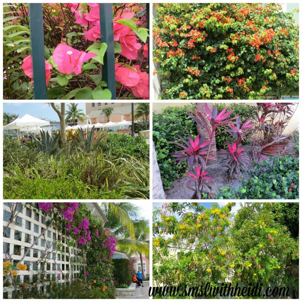 Nassau Flowers