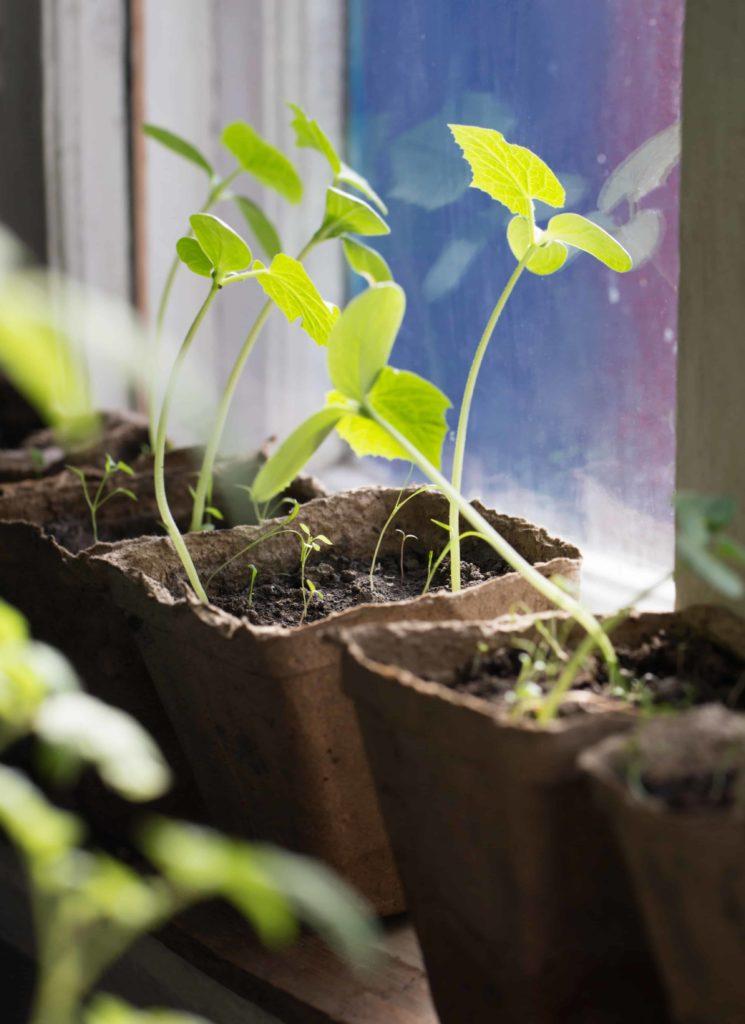 Ways to save money by gardening