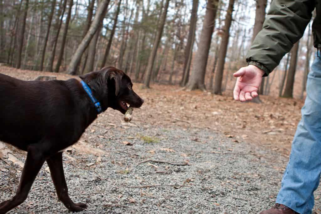 Things To Consider Before You Bring A Dog Into The Family