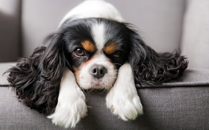 Finding the Right Dog for Your Lifestyle