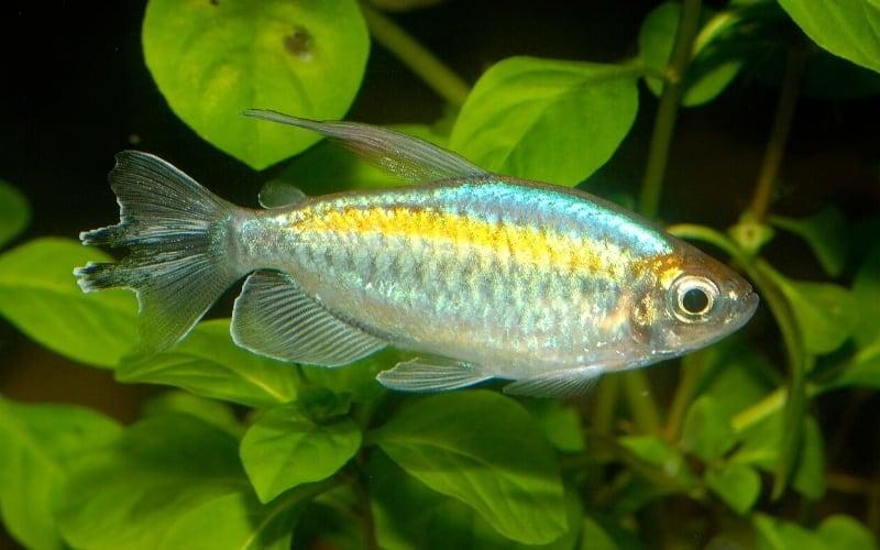 How to Make Keeping Fish More Straightforward