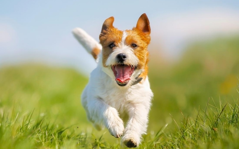 The Nitty and Gritty_10 Most Important Things Every Dog Owner Should Know